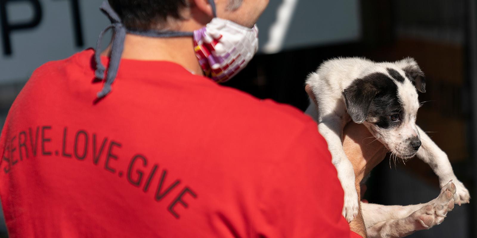 WTG-Nothilfefonds: Für Hunde und Katzen in Khayelitsha