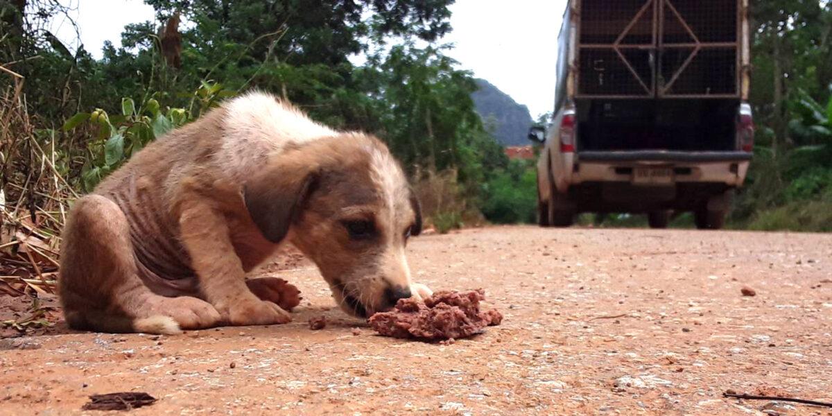streuner-coronakrise-streunerhund_WTG-© Lanta Animal Welfare Organisation