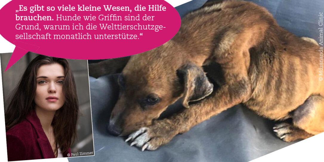 coronakrise-streunerhund_WTG © Paul Zimmer und Mdzananda Animal Clinic