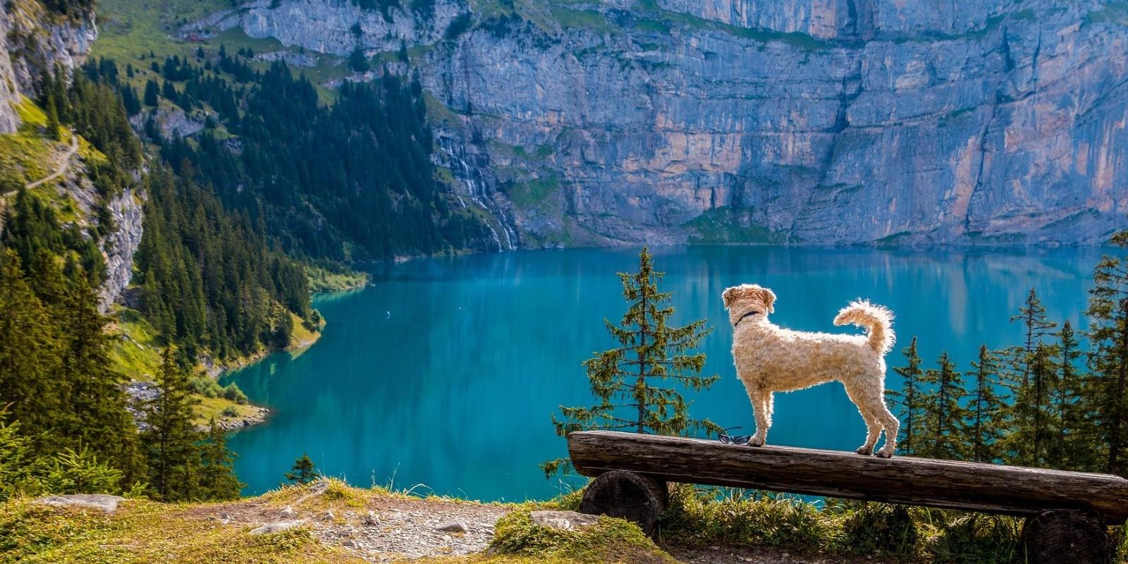 Tipps zum Reisen mit Tieren