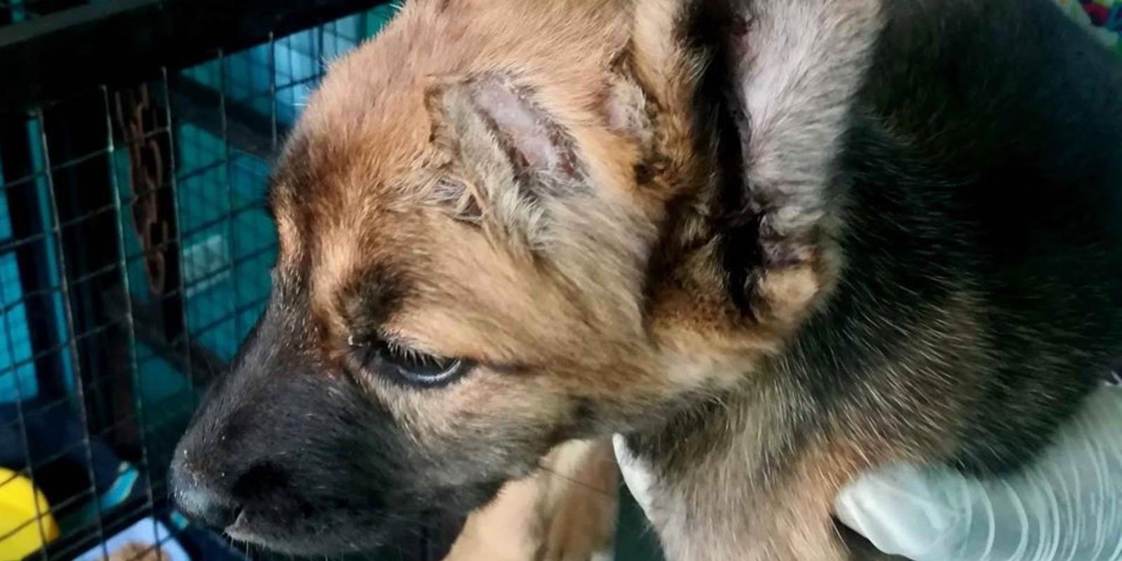 Illegaler Haustierhandel am Straßenrand