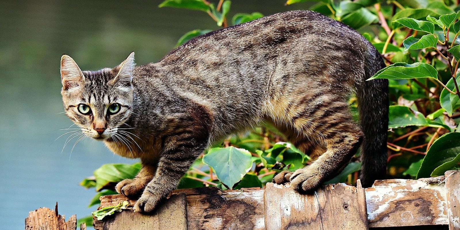 Katzenschutzverordnung für Berlin